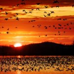 Bird Migration 101: When & How Do Birds Migrate?