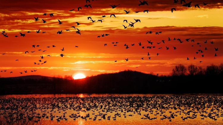 bird migration history