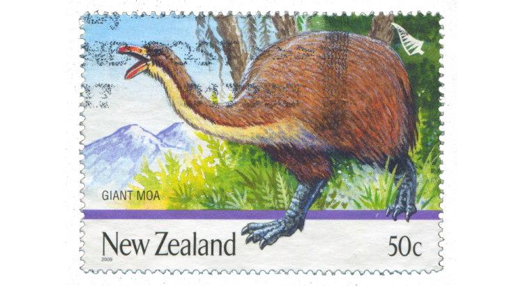 extinct moa bird