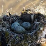 Bird Nests 101: Identifying Different Types Of Bird's Nests