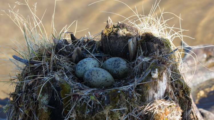 types of bird nest header