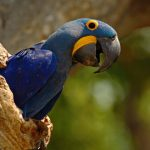 Parrots: The Colorful World Of The Psittaciformes
