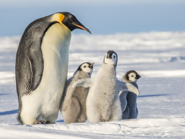 penguin an example of life on earth