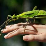 Pet Stick Insects 101: How To Take Care Of These Lovable Bugs