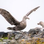 Procellariiformes: The Order Of The Petrels
