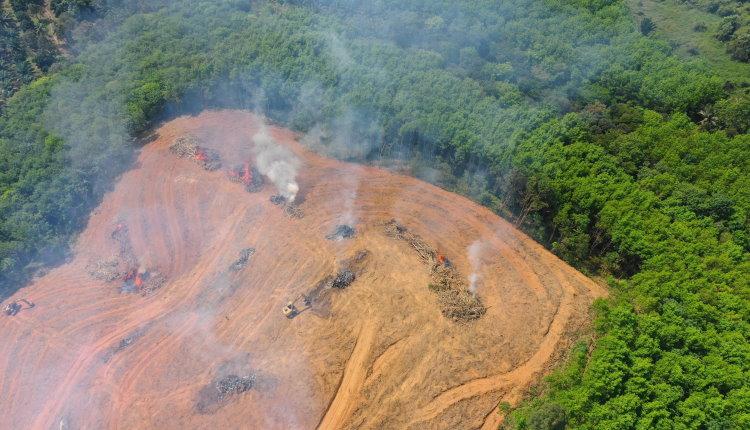 rainforest destruction causing extinction