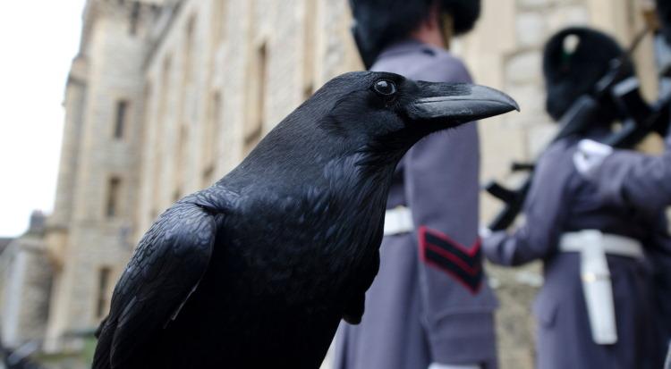 raven mythology tower of london