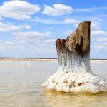 The Euryarchaeota: Nature's Lovers of Salt