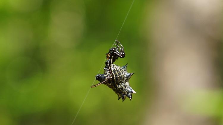spider on silk strand