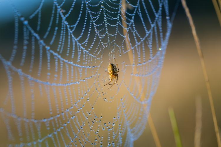 spider silk web