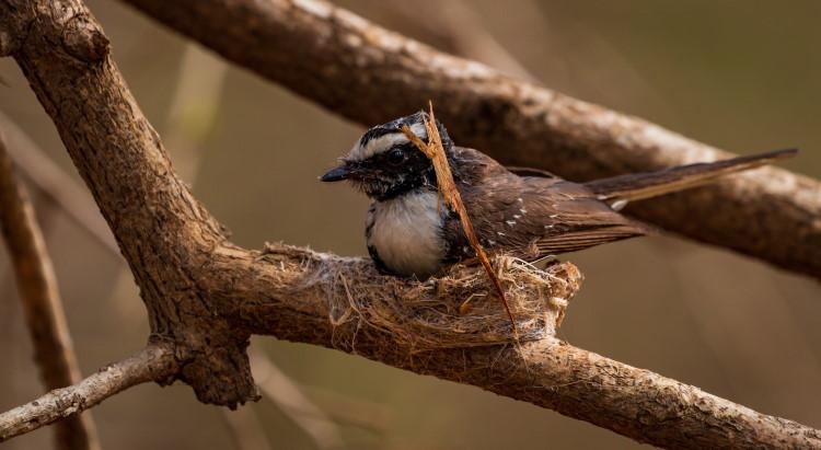 spider silk birds nest