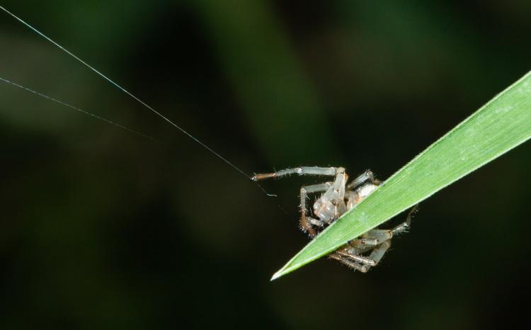 spider uses silk dragline