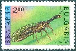 Bulgarian Stamp showing a Raphidiopteran.