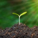 """Soil Ecology 101: All About The World Of The """"Soil Makers"""""""