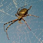 21 Spider Facts: Including The Largest & Most Venomous In The World