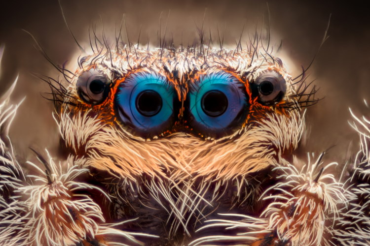 spiders hairs and eyes close up