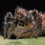 Spider Reproduction 101: Just How Do Spiders Mate?