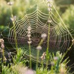 Spider Webs 101: The Evolution & Types Of This Engineering Marvel