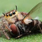 What Do Spiders Eat? Taking A Look Into The Spider's Diet