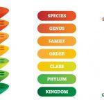 Taxonomy Basics: How It All Works (Thanks Carl Linnaeus!)