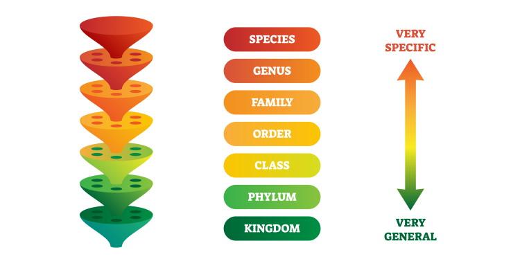 bird taxonomy example