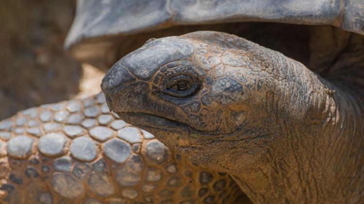 tortoise shows how long do animals live