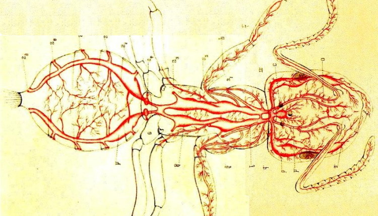 insect trachea drawing