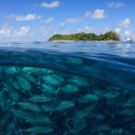 Are Fish Cold Blooded? The Magic Of Thermoregulation