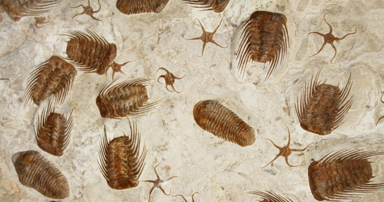 fossil trilobites mixed with other species