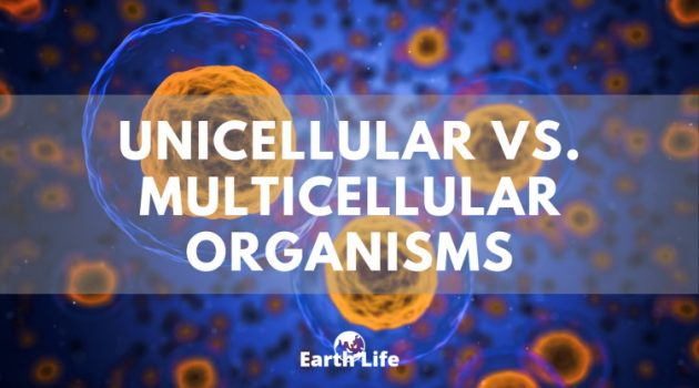 unicellular vs multicellular cells floating