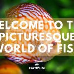 Fish Facts: The Largest, Smallest, Fastest & Dumbest In The World